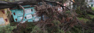 La rama quedó tirada sobre los nichos del Cementerio General de Quetzaltenango. (Foto Prensa Libre: María Longo)