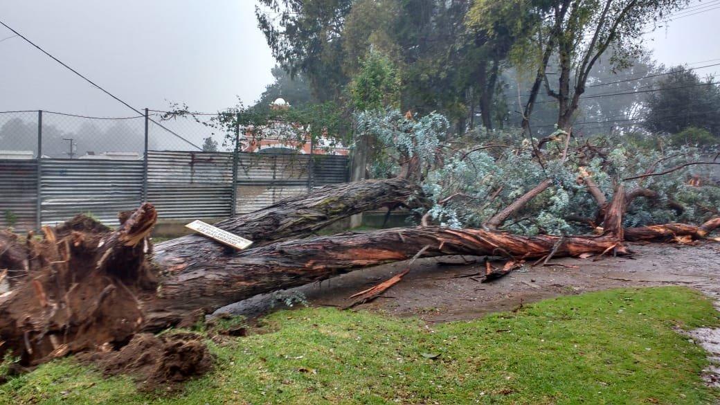 Víctima del temporal: Hombre muere al caerle un árbol en San Lucas