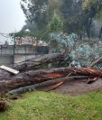 El árbol cayó sobre tres hombres que estaban almorzando. (Foto Prensa Libre: Conred)
