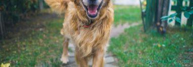 Algunos problemas de conducta y salud de los perros se deben a que pasan muchas horas en soledad. (Foto Prensa Libre: Servicios)