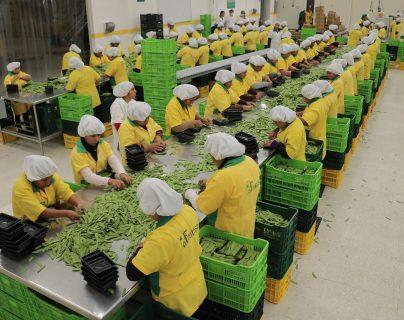 La planta de empaque de vegetales frescos de Frutesa, entre estos arvejas chinas y arvejas dulces. (Foto Prensa Libre: Hemeroteca)