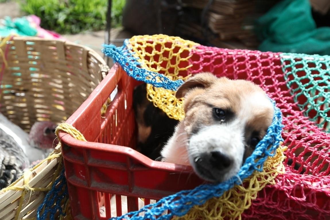 Disposición pretende eliminar las ventas callejeras de perros y gatos