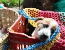 Las mascotas también deben cuidarse del distanciamiento social para evitar un contagio.  (Foto Prensa Libre: Hemeroteca)