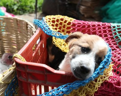 La prohibición es para la venta de perros y gatos en la plaza de Salcajá. (Foto Prensa Libre: María Longo)