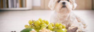 Uvas, nueces pasas y chocolate son alimentos que no debe darles a los perros porque pueden causarles la muerte. Foto Prensa Libre: Servicios