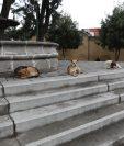 En los primeros seis meses de este año en la cabecera departamental de Quetzaltenango se registraron más de 500 personas mordidas por perros. (Foto Prensa libre María Longo)
