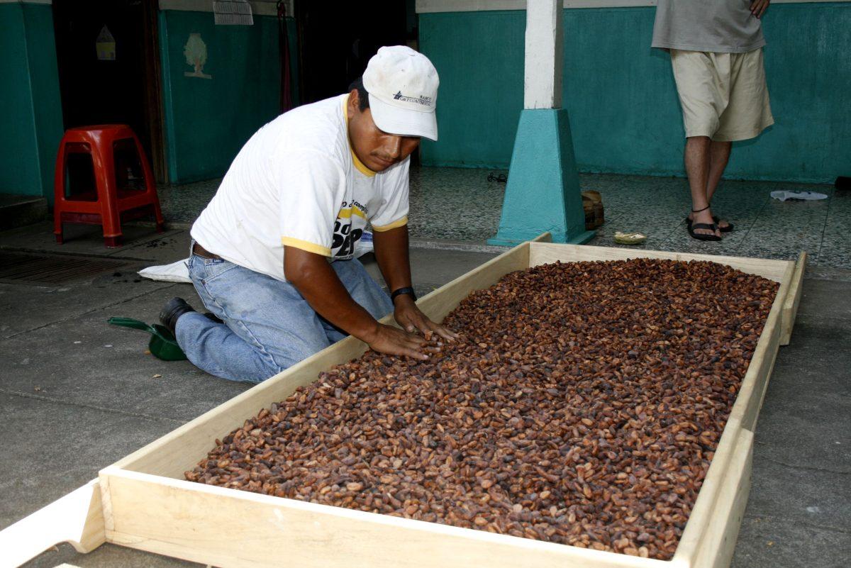 Premios de cacao internacional se celebrarán en Guatemala