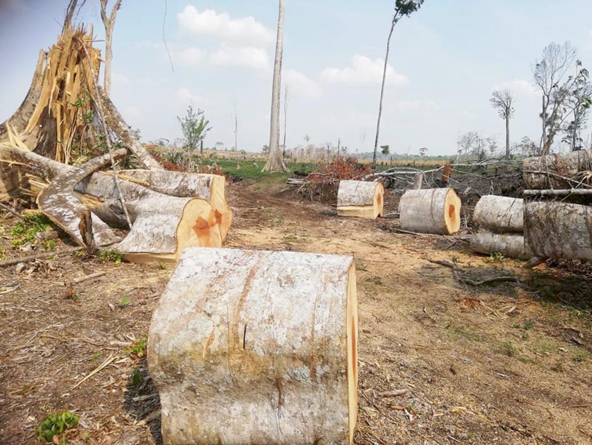 Señalan falta de apoyo del Inab a proyectos forestales en astilleros municipales de Petén