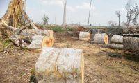 Los bosques de varios sectores de Petén están expuestos a talas ilegales. (Foto: Hemeroteca PL)