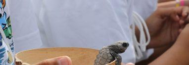 Las tortugas parlamas son presa de la caza ilegal para extraerles los huevos que son comercializados posteriormente. Imagen ilustrativa. (Foto Prensa Libre: Carlos Paredes)