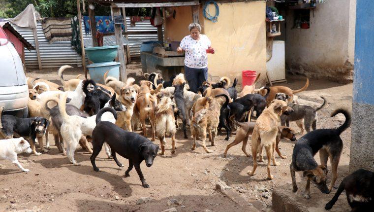 La familia Abac Morán ofrece un refugio para perros de la calle en Huehuetenango. (Foto Prensa Libre: Mike Castillo)