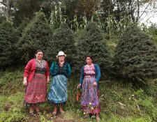 Seis grupos de mujeres en Pixabaj Sololá, producen pinabetes para ganar dinero para sus familias. (Foto Prensa Libre: Mynor Toc)