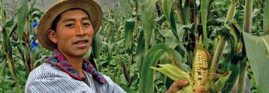Félix Ramírez, de Todos Santos Cuchumatán, fue uno de los miles de agricultores que recibió asistencia técnica del Proyecto Buena Milpa. (Foto Prensa Libre: Proyecto Buena Milpa)