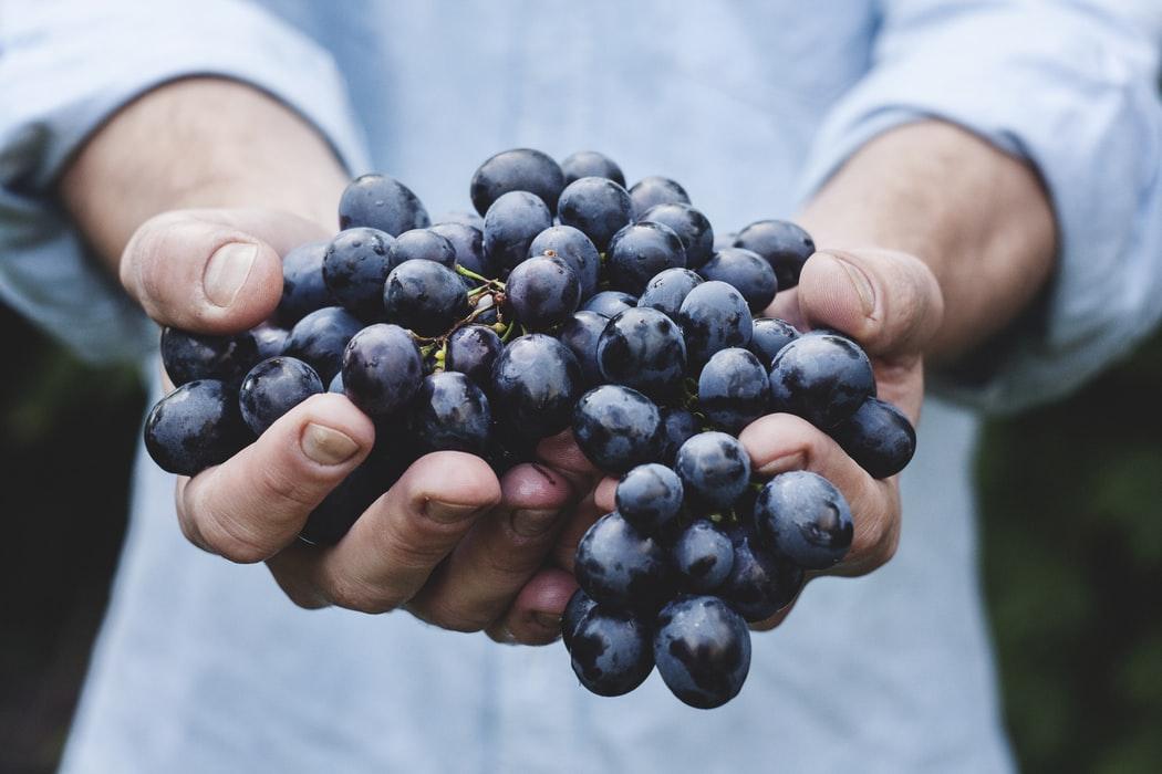 Por qué debe incluir uvas en su dieta