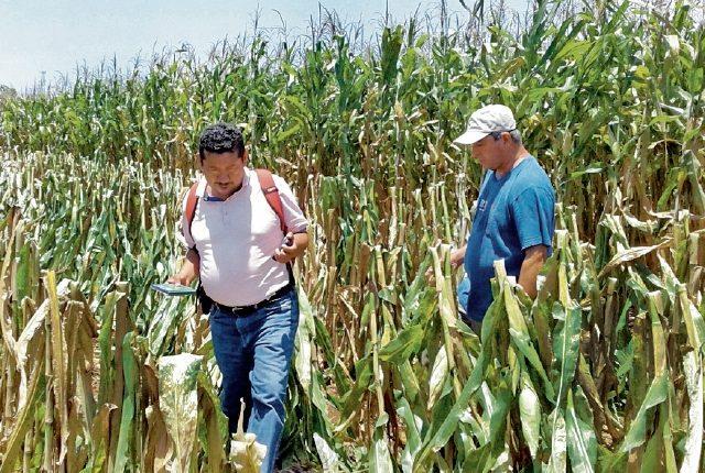 La sequía afecta el corredor seco y a su vez a miles de familia que padecen del hambre estacional. (Foto, Prensa Libre: Hemeroteca PL).