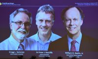 The winners of the 2019 Nobel Prize in Physiology or Medicine (L-R) Gregg Semenza of the US, Peter Ratcliffe of Britain and William Kaelin of the US appear on a screen during a press conference at the Karolinska Institute in Stockholm, Sweden, on October 7, 2019. - William Kaelin and Gregg Semenza of the US and Peter Ratcliffe of Britain win the 2019 Nobel Medicine Prize. (Photo by Jonathan NACKSTRAND / AFP)