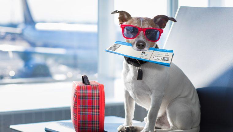 Si planea compartir un viaje con su mejor amigo, recuerde que debe tomar en cuenta algunos aspectos para su bienestar. (Foto Prensa Libre: Servicios).