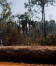 Algunos científicos sostienen que la Amazonía ha sufrido pérdidas aceleradas desde que Jair Bolsonaro asumió la presidencia. REUTERS