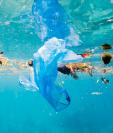 """""""Seguramente es perjudicial que las crías de peces ingieran partículas de plástico en la etapa crítica de los primeros días de vida"""", afirmó Gareth Williams. GETTY IMAGES"""