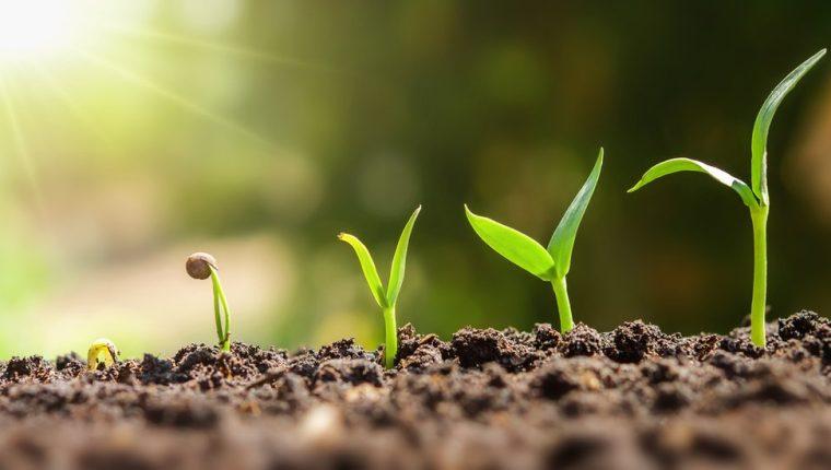 Las plantas tienen memoria de períodos de sequías, y aprenden a adaptarse en caso de que el estrés se repita.