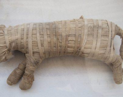 Los arqueólogos creen que dos de los animales momificados pueden ser cachorros de león.