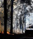 Un área  de dos mil hectáreas han sido devastada durante la temporada de incendios forestales, la cual comenzó antes de tiempo. (Foto Prensa Libre: Hemeroteca PL)
