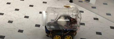 Esta rata conduce un auto de juguete. Deutsche Welle