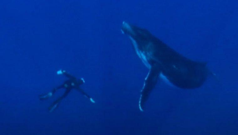 Las ballenas presentan un efecto multiplicador en cuanto a la producción de fitoplancton. Deutsche Welle