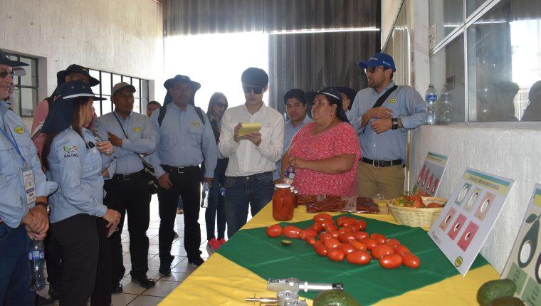 Integrantes de la iniciativa KoLFACI conocieron sobre el manejo postcosecha del tomate. (Foto Prensa Libre: Cortesía ICTA)