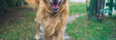 Ahora es posible saber la edad de los perros. (Foto Prensa Libre: Hemeroteca PL)
