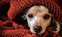 Los perros son parte de muchas familias. (Foto Prensa Libre: Hemeroteca PL).