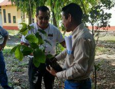 Domingo Buezo, obispo de Izabal, entrega un árbol a un misionero que reforestará áreas de El Estor. (Foto Prensa Libre: Dony Stewart)
