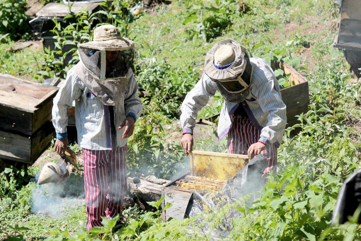 Productores de miel y café reciben apoyo para incrementar las exportaciones a Europa, Japón y EE. UU.