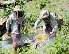 Productores de miel en Todos Santos Cuchumatán, son beneficiados con los proyectos financiados por la Unión Europea que les permitirán exportar miel. (Foto Prensa Libre: Mike Castillo)