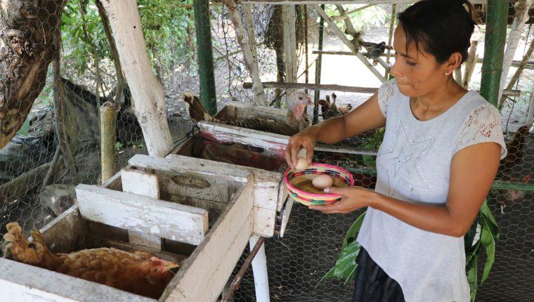 Las familias ahora no solo tienen un medio para subsistir, sino que también para generar ingreso económicos. (Foto Prensa Libre: Carlos Paredes)