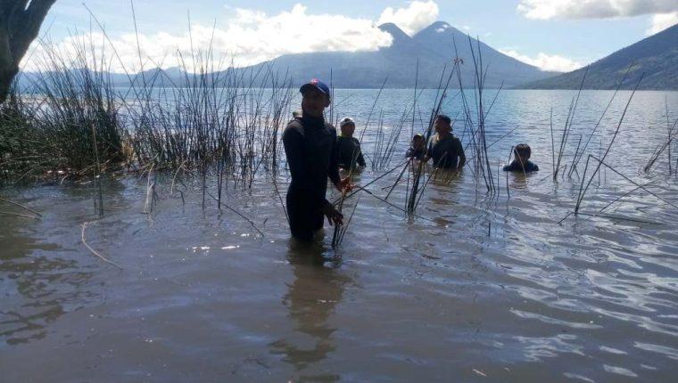En San Marcos La Laguna, Sololá, pobladores y un grupo de extranjeros sembraron tul para descontaminar el Lago de Atitlán. (Foto Prensa Libre: Corazón del Tul)