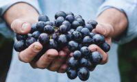 En Sevilla, España se están desarrollando estudios que involucran una sustancia que tienen las uvas para detener el desarrollo del cáncer. (Foto Prensa Libre: Servicios)