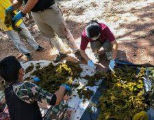 Veterinarios examinan piezas de desechos plásticos recuperados del estómago de un ciervo muerto en el Parque Nacional Khun Sathan en la provincia de Nan en Tailandia. (Foto Prensa Libre: AFP)