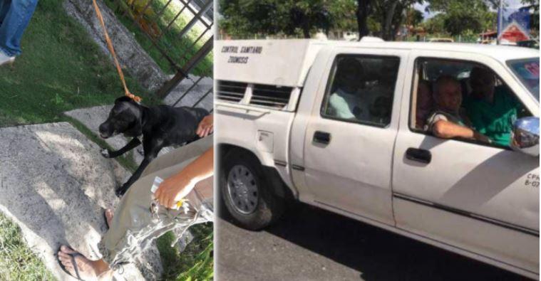Zoonosis, el control sanitario de Cuba, es denunciado por activistas de los animales. (Foto: Twitter/@CaltonMarisbel)