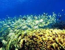 """Según los científicos, el """"enriquecimiento acústico"""" atrae a los peces y ayuda a resucitar los arrecifes de coral moribundos. GETTY IMAGES"""