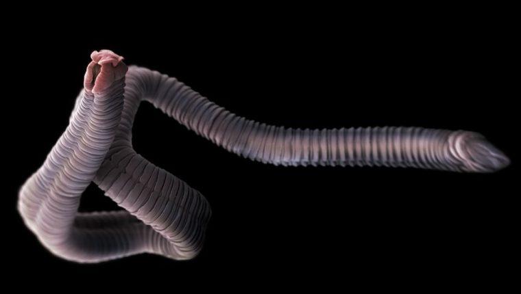 Aunque la mayoría de los protozoos y los helmintos son, por lo general, no patógenos, algunos sí pueden producir enfermedades graves en los seres humanos.