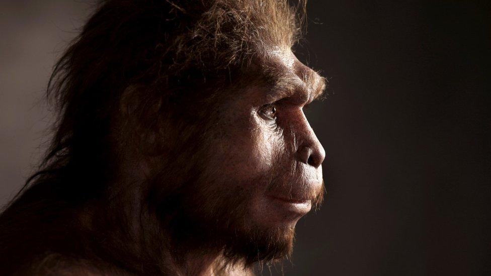 Homo erectus: por qué los antiguos humanos sobrevivieron más de lo que pensábamos