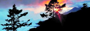 Los bosques naturales de pinabete están expuestos a varias amenazas. (Foto Prensa Libre: EFE)