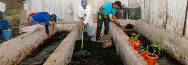 Comunitarios de Loma Linda, El Palmar, Quetzaltenango, producen fertilizante orgánico desde hace 10 años que sirve para los cultivos de café en la zona.  (Foto Prensa Libre: Rolando Miranda)