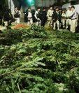 La mayoría de los decomisos de ramillas de pinabete en la cabecera departamental de Quetzaltenango se registraron en el mercado La Democracia y en la Terminal Minerva, zona 3 de Xela. (Foto Prensa Libre: María Longo)