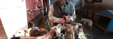 Unidad de Bienestar Animal investiga a vecino de Totonicapán por supuestas jornadas ilegales de castración de perros. (Foto Prensa Libre:  Mynor Toc)