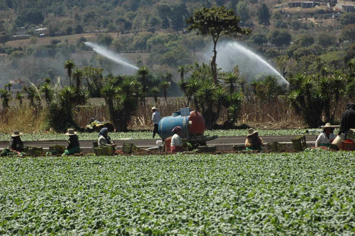 Salario mínimo 2020 en Guatemala subirá para dos actividades, pero en el agro sigue sin cambios
