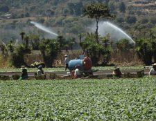 El salario mínimo para actividades agrícolas no tendrá modificaciones para el año próximo. (Foto Prensa Libre: César Pérez)