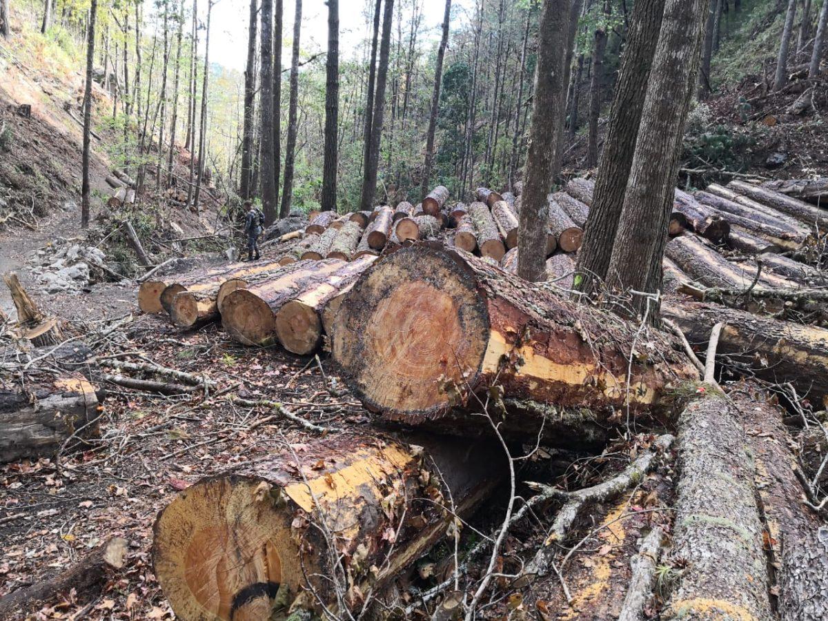 Corte ilegal de árboles alarma y envían este mensaje para advertir los daños provocados