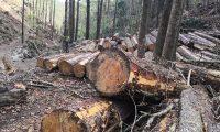 Las talas ilegales son una de las principales amenazas de los bosques en Guatemala. (Foto Hemeroteca PL)